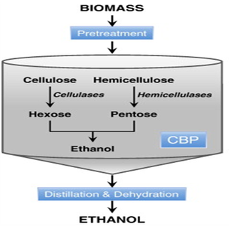 What Is Ethanol >> Technical Process - Consolidated Bioprocessing with Corn ...